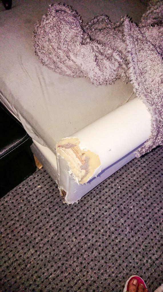 Пес-разрушитель уничтожил диван и его опять спасла милая мордаха