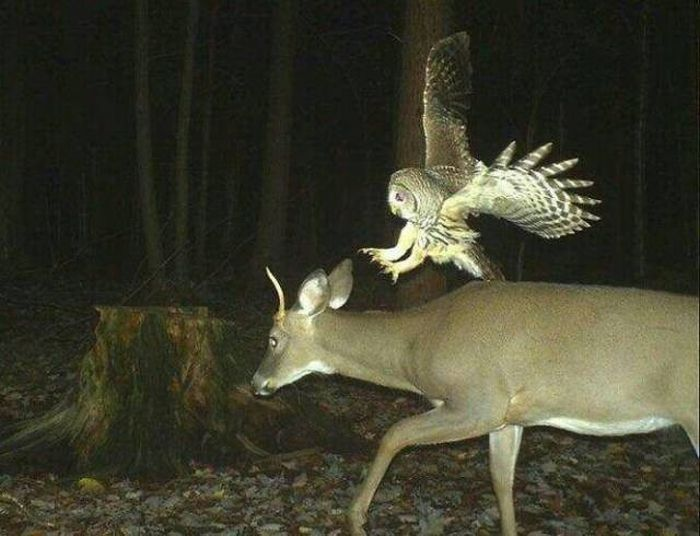 Странные снимки животных с фотоловушек