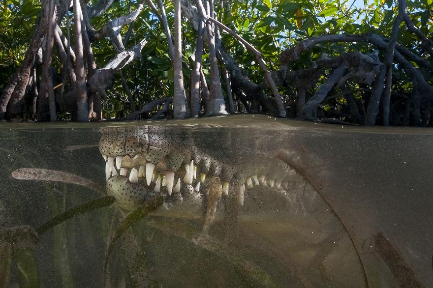 Мир под толщей воды на снимках Мэтти Смита