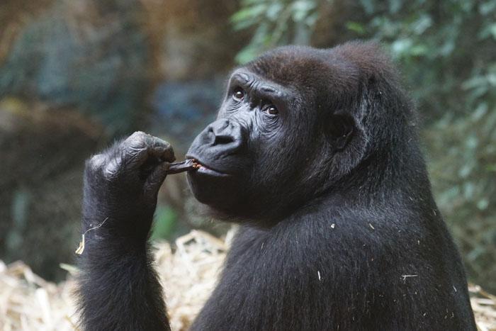 Потрясающие подробности о животных