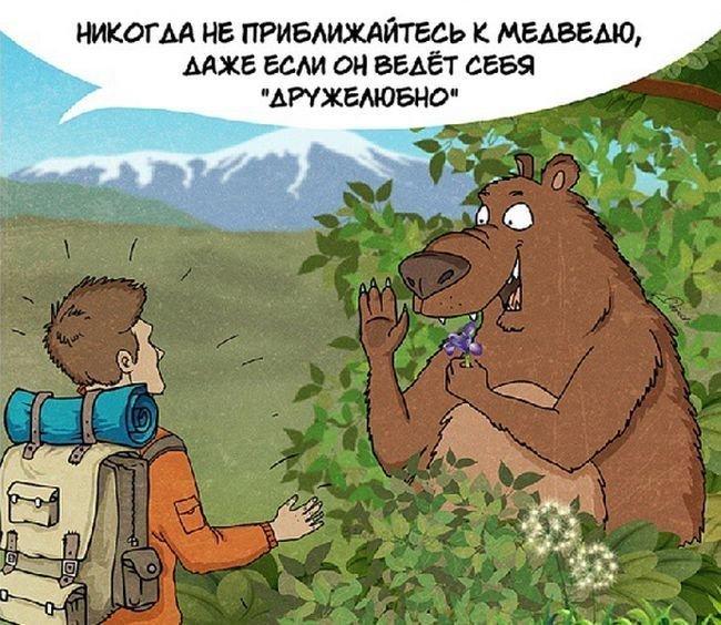 Как следует вести себя при встрече с медведем