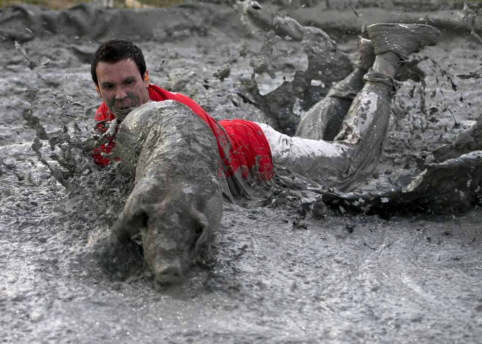 Свинский фестиваль в Канаде