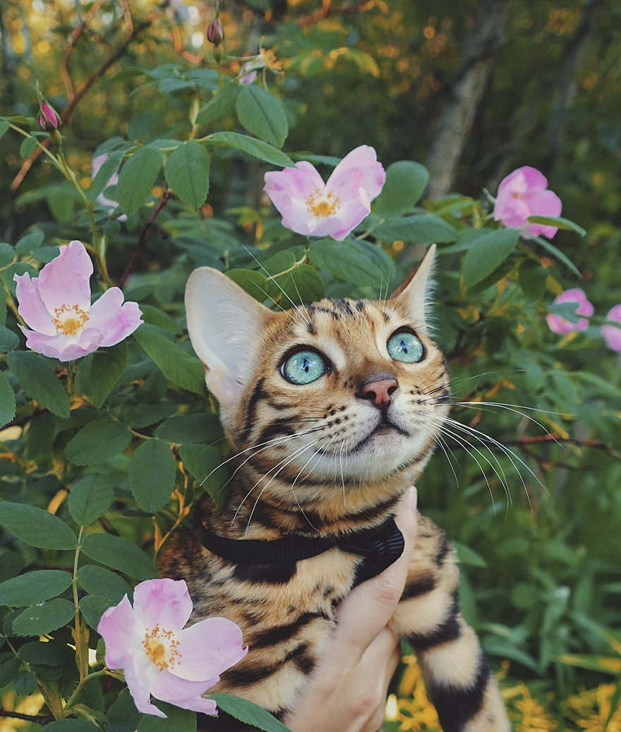 Кошка-путешественница, которой можно позавидовать