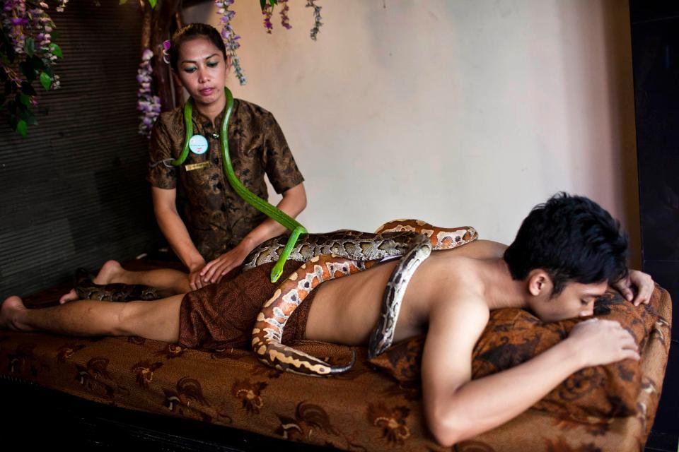 Массаж змеями набирает популярность в разных странах мира