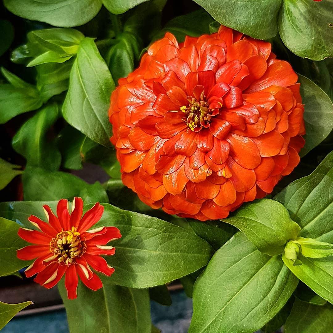 Красивые цветы на снимках Fred Kay