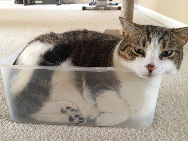 Кошки — это жидкость
