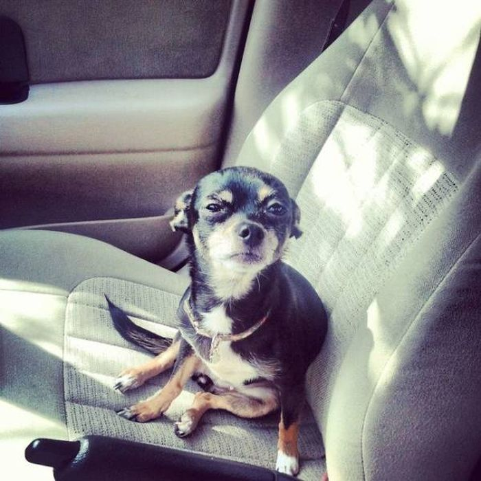 Животные и пугающая поездка к ветеринару