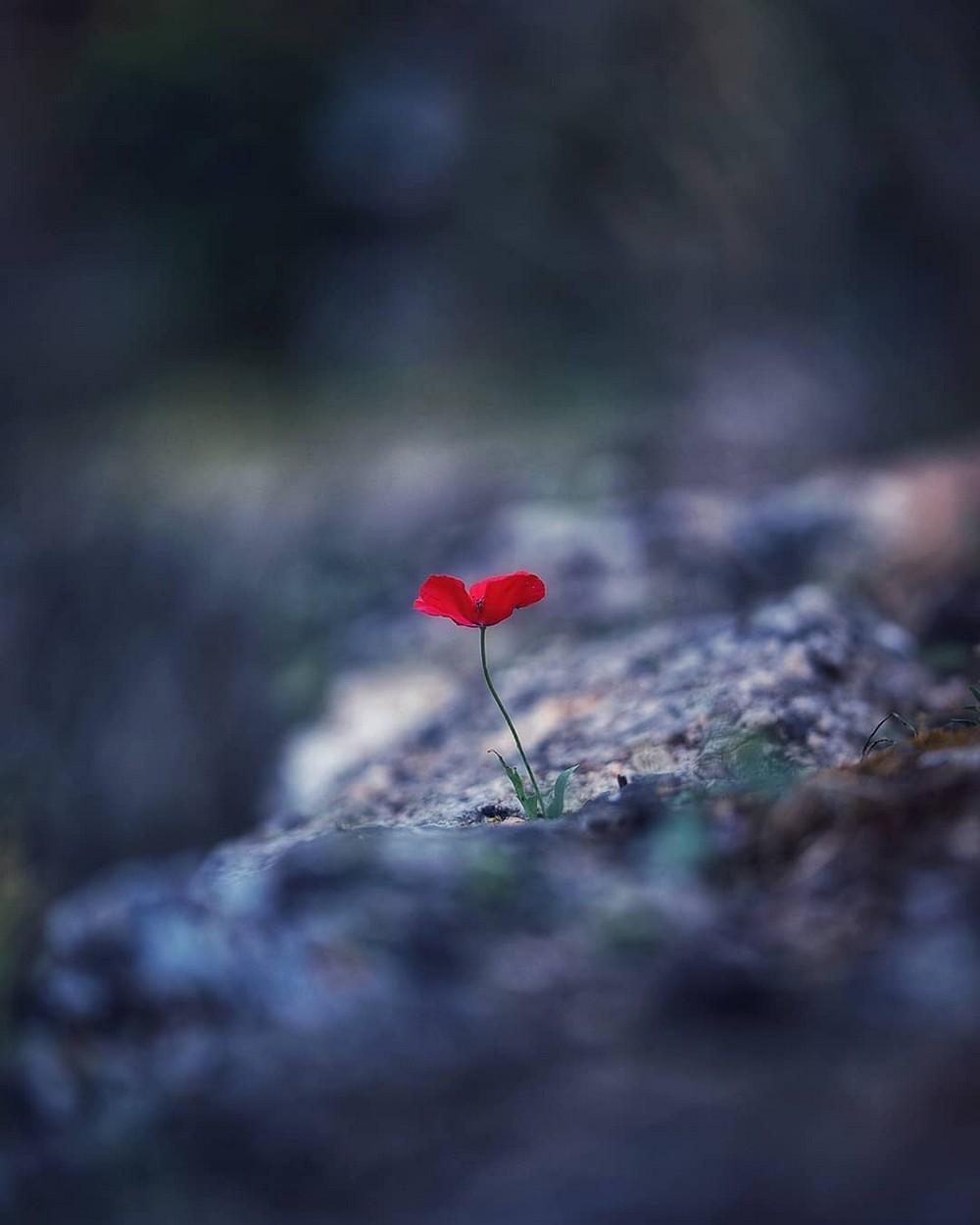 Эффектные макрофотографии цветов от Ани Стребер
