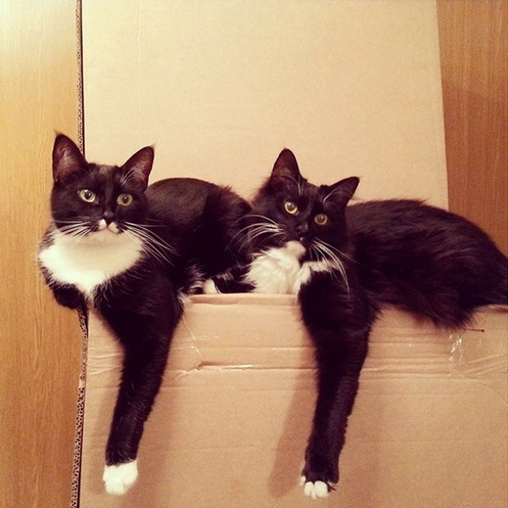 Малоисследованный факт - кошки синхронизируются