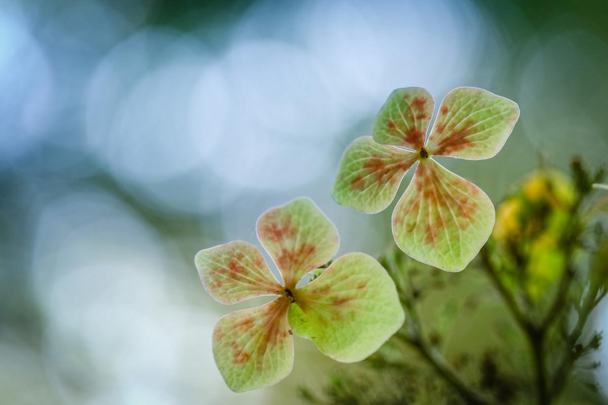 Победители фотоконкурса Садовый фотограф года 2018