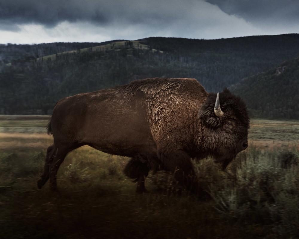 Дикая природа и животные на снимках Троя Мота
