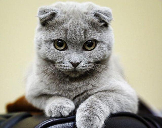 Красивые и необычные кошки