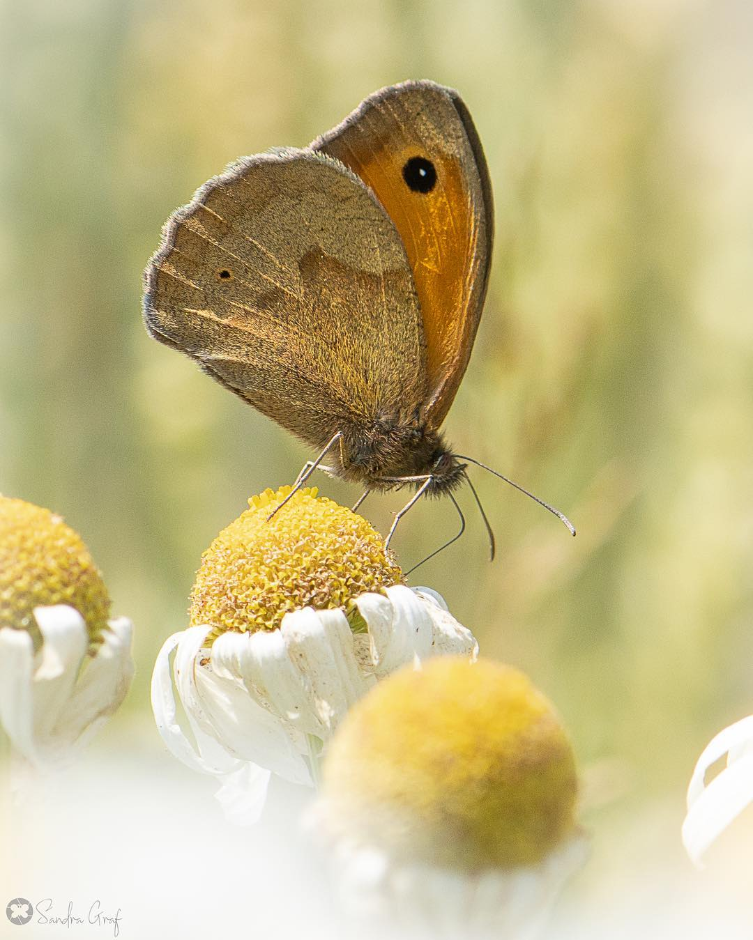 Удивительные фотографии бабочек и цветов от Сандры Граф