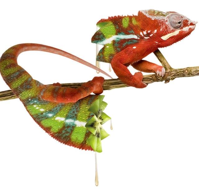 Художники создали необычных гибридов животных и растений с помощью Photoshop