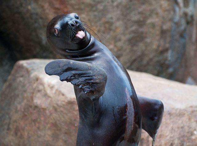 Забавные снимки животных, которые показывают язык