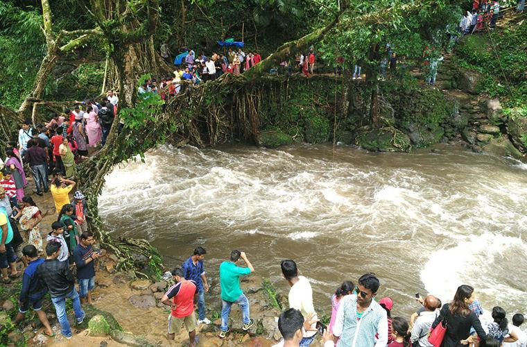 Живые мосты в индийском городке Черапунджи