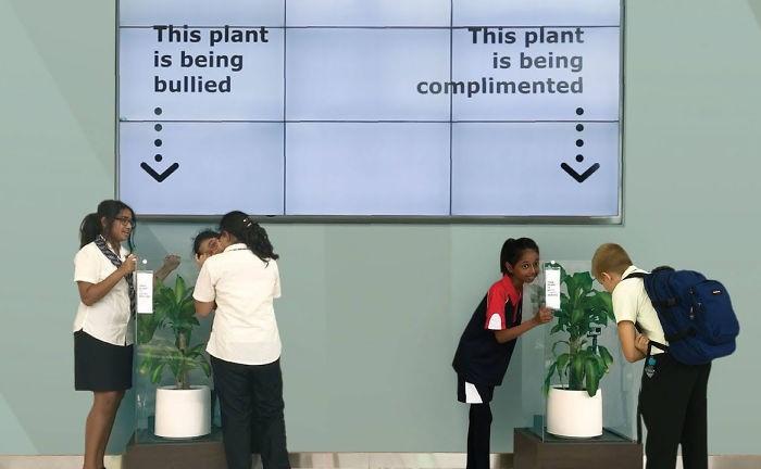 Чего можно добиться, оскорбляя растение