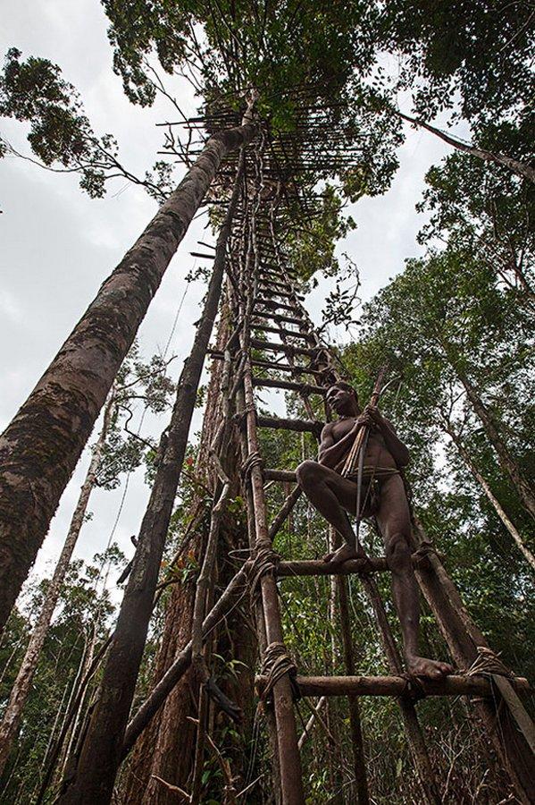 Что нам могут рассказать люди, которые не пользуются всеми благами человечества, а, к примеру, живут на деревьях?