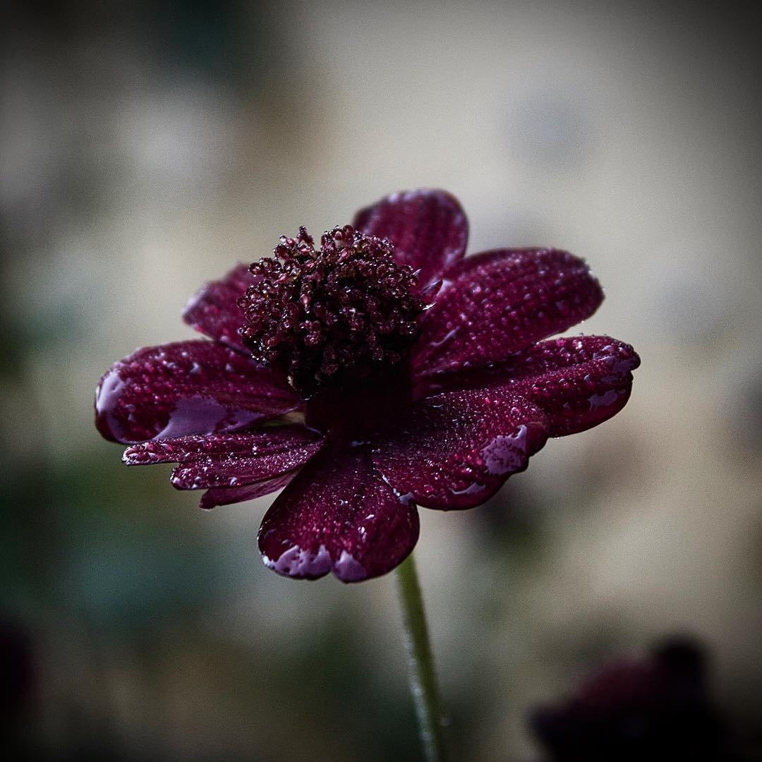 Удивительные снимки цветов крупным планом от Энн Венер