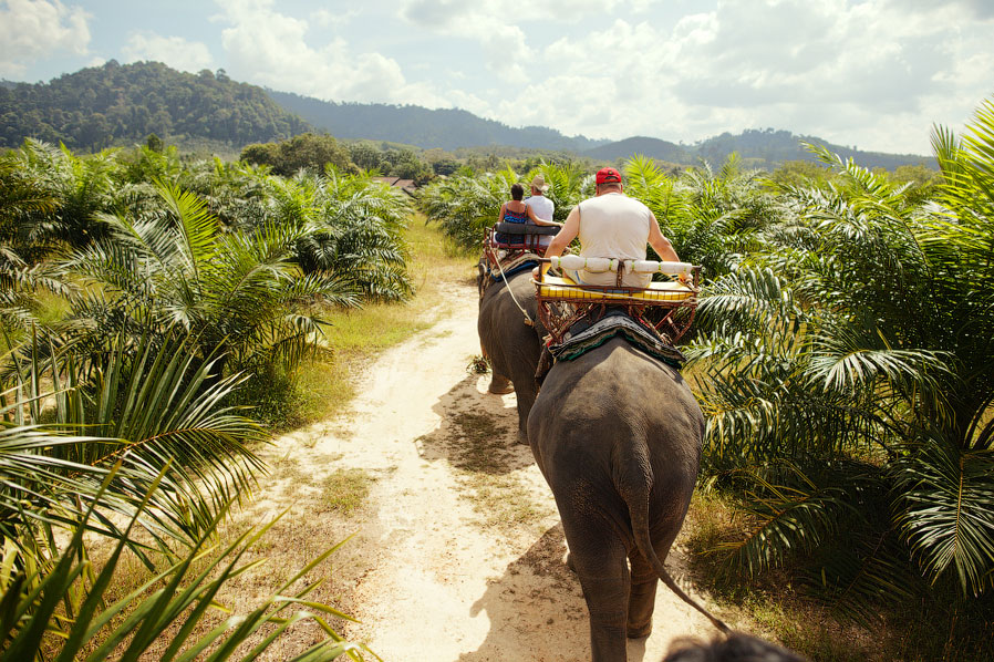 Слон — живой символ Королевства Таиланд