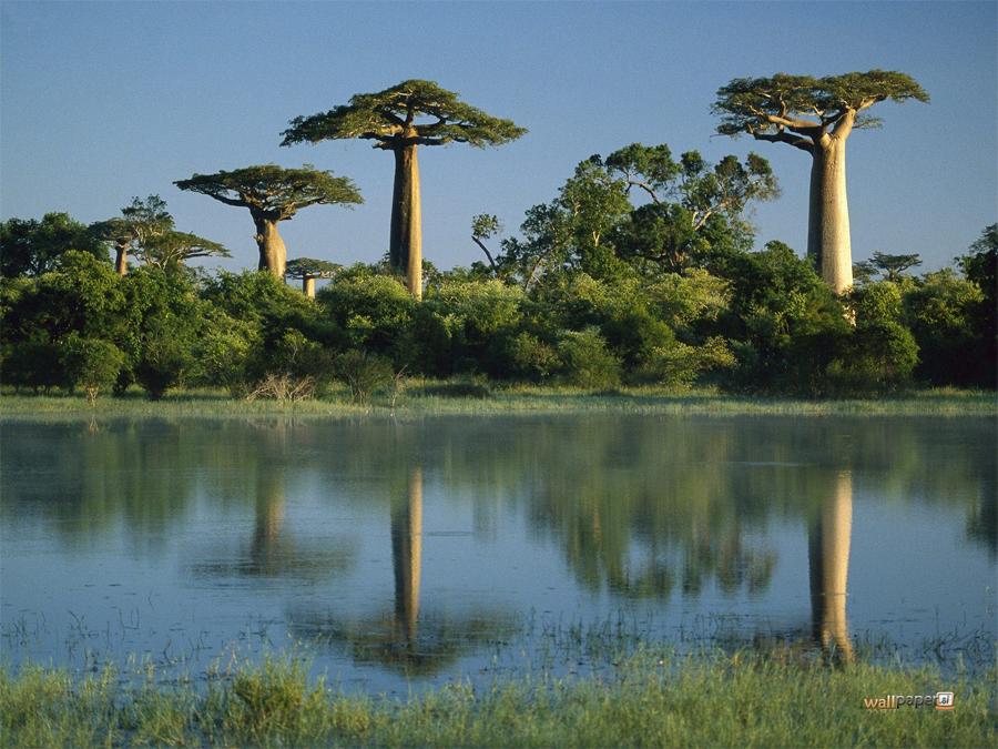7 лесов, которые скоро могут исчезнуть