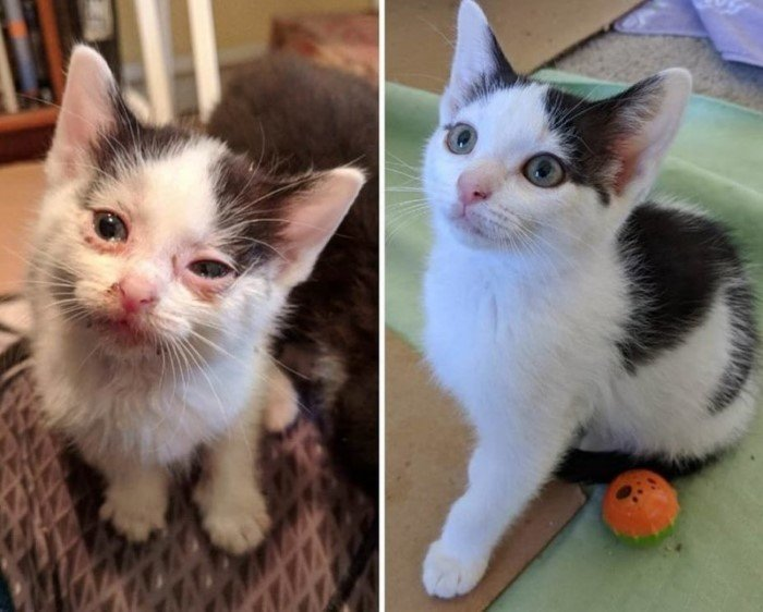 Домашние животные до и после того, как они попали в заботливые руки