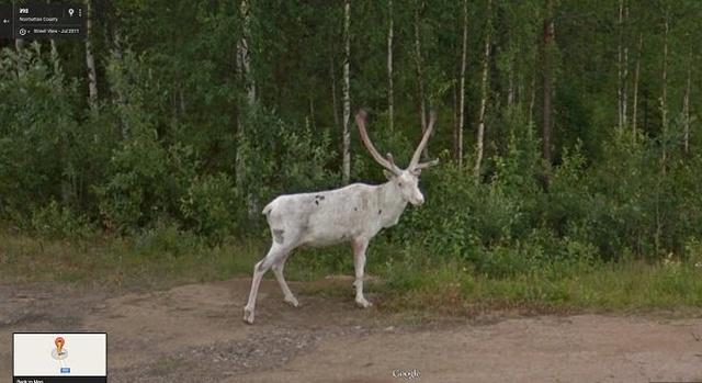 Животные попали в кадр на Картах Google