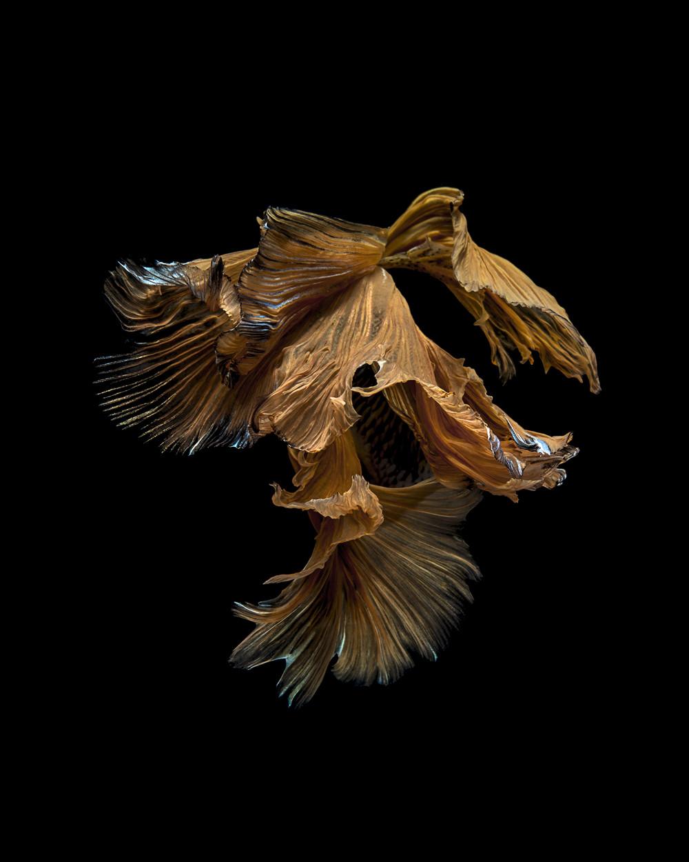 Фантастические снимки рыб от тайского фотографа