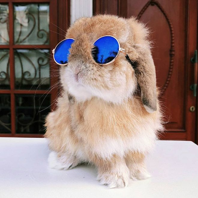 Кролики очень круто смотрятся в солнцезащитных очках