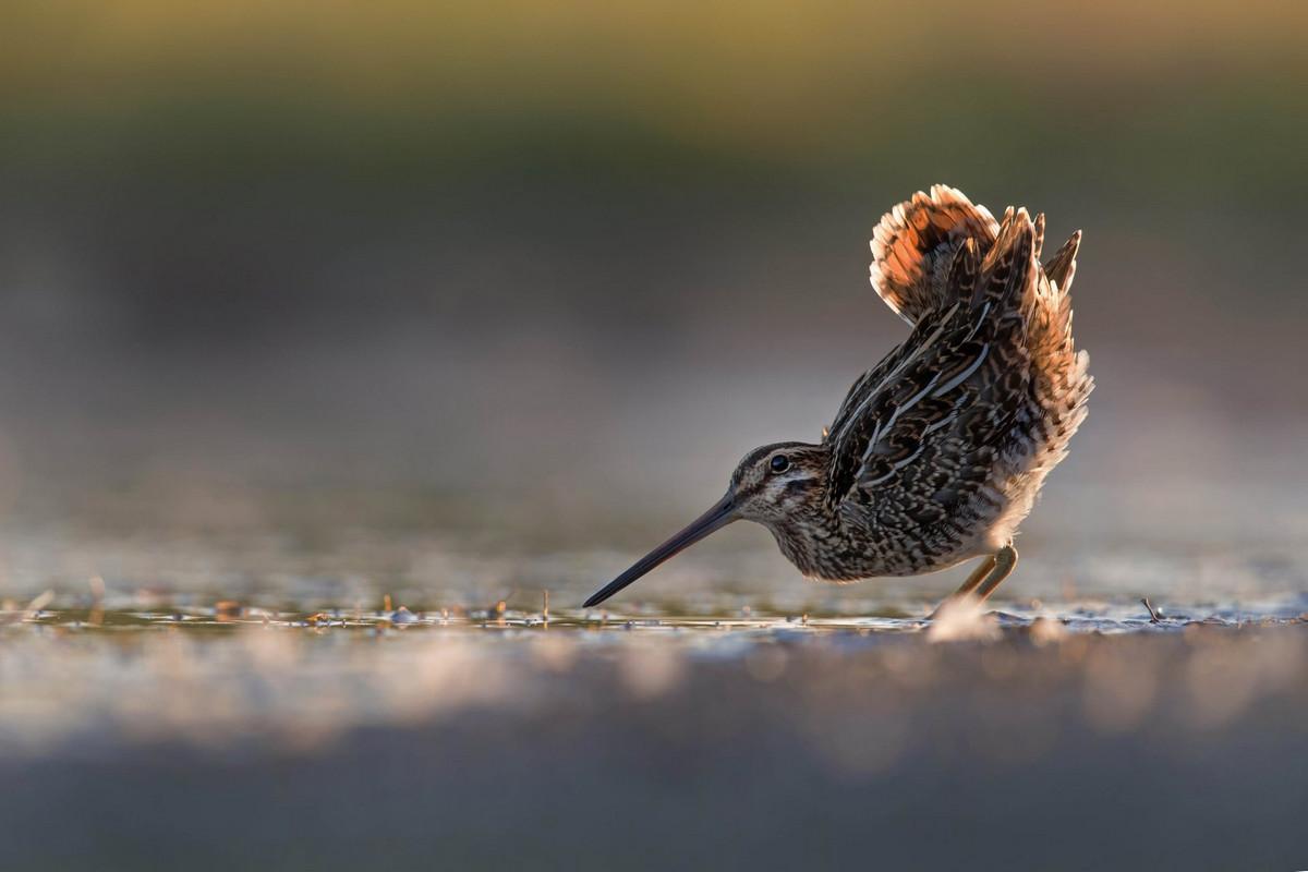 Лучшие работы с конкурса Bird Photographer of the Year 2018