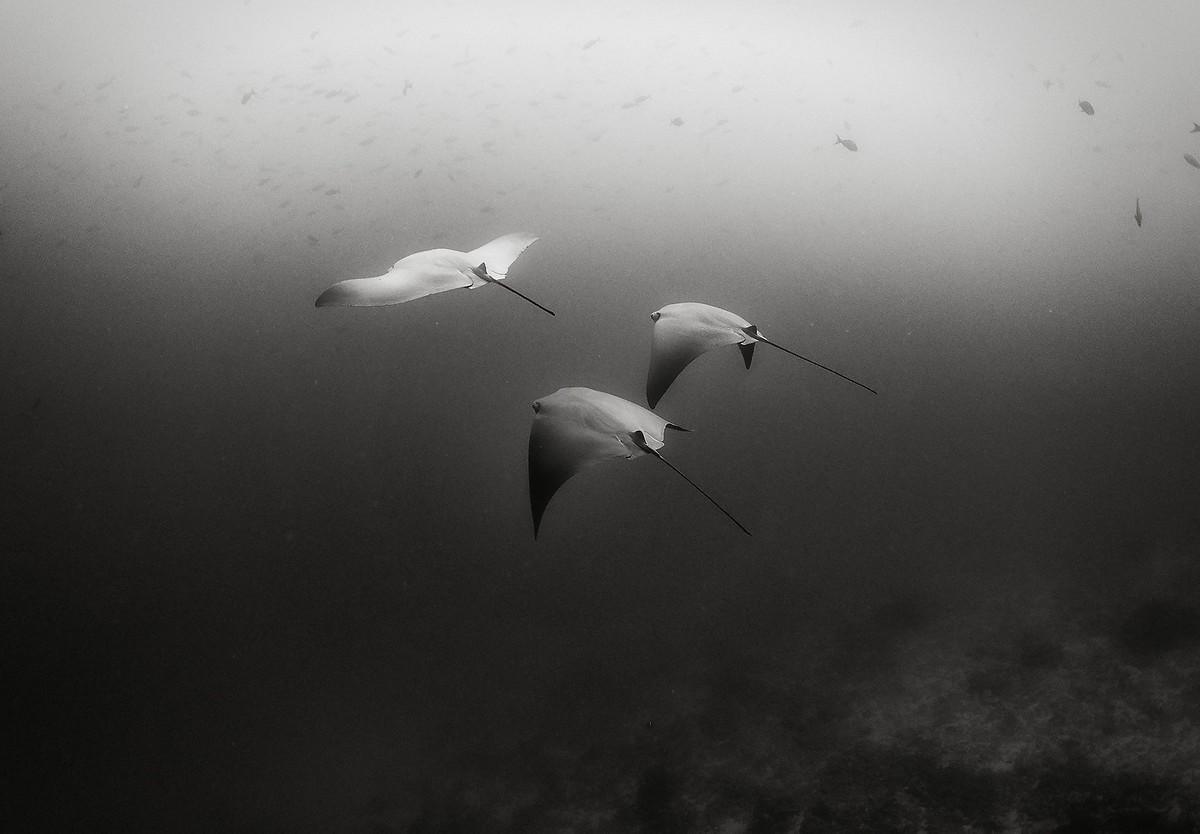 Подводное царство на снимках Ануара Пэтджэйна