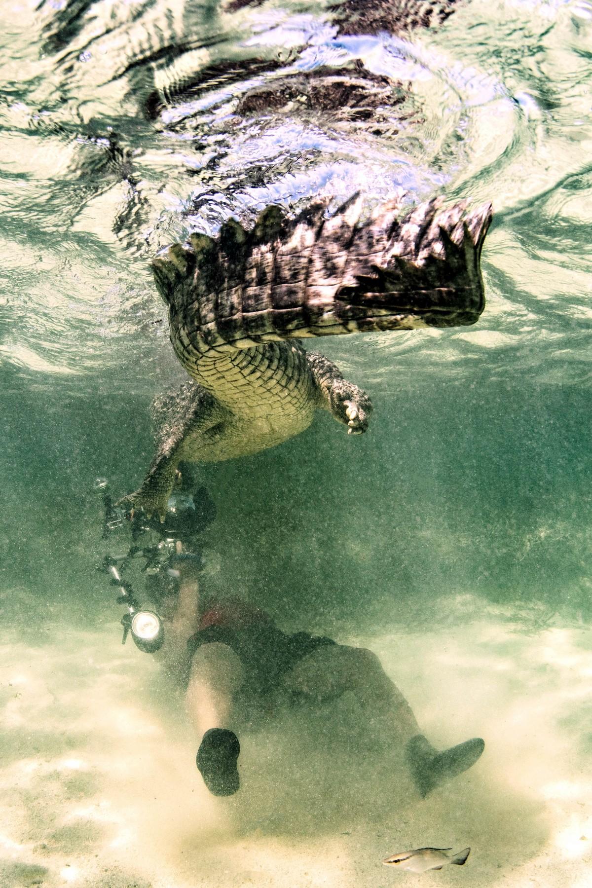 Фотосессия с крокодилами в их естественной среде обитания
