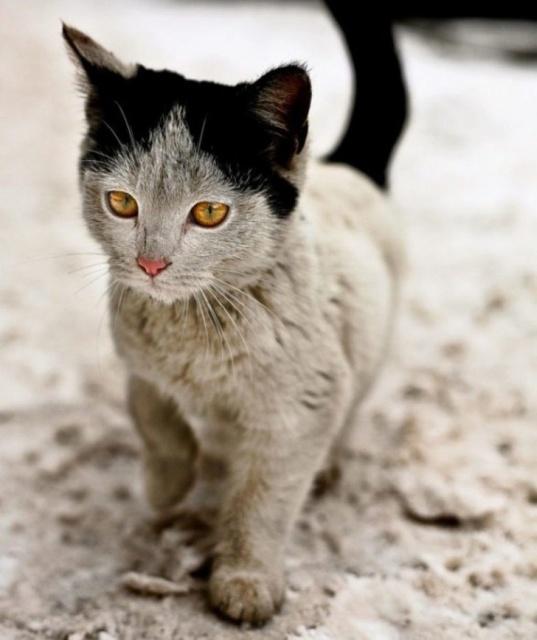 Животные могут удивить своим окрасом