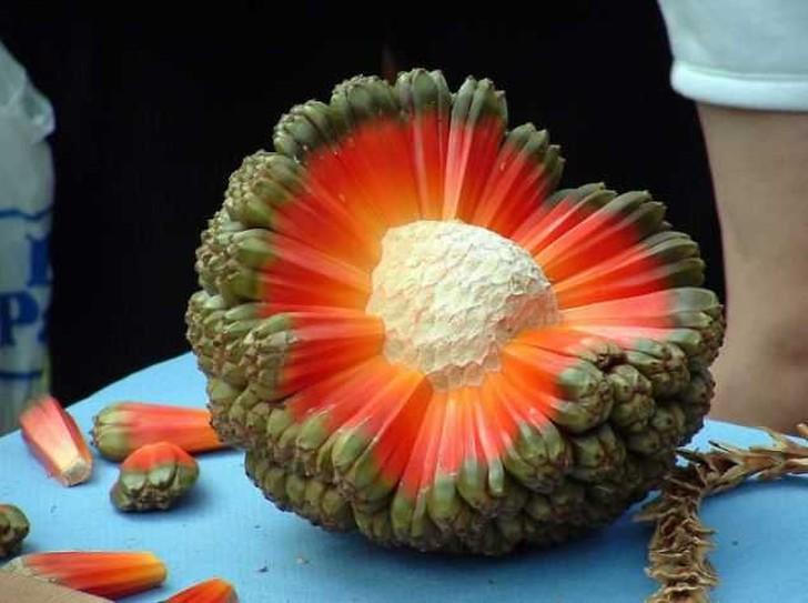 Экзотические фрукты со всего мира