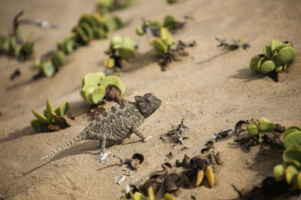 Красота побережья Намибии на снимках