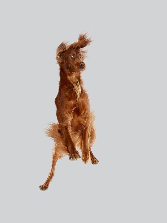 Летающие собаки, которые прыгают на батуте