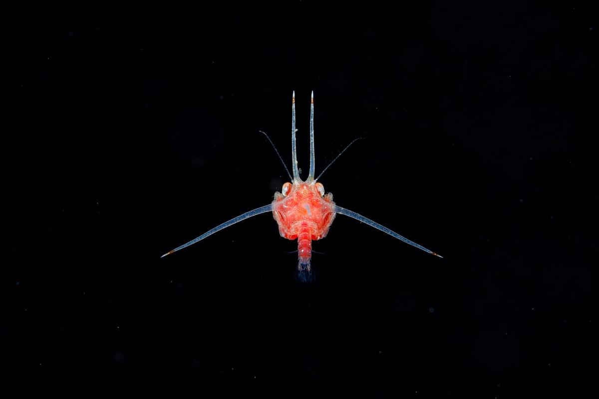 Необычные подводные существа у побережья Японии от Рю Минемицу