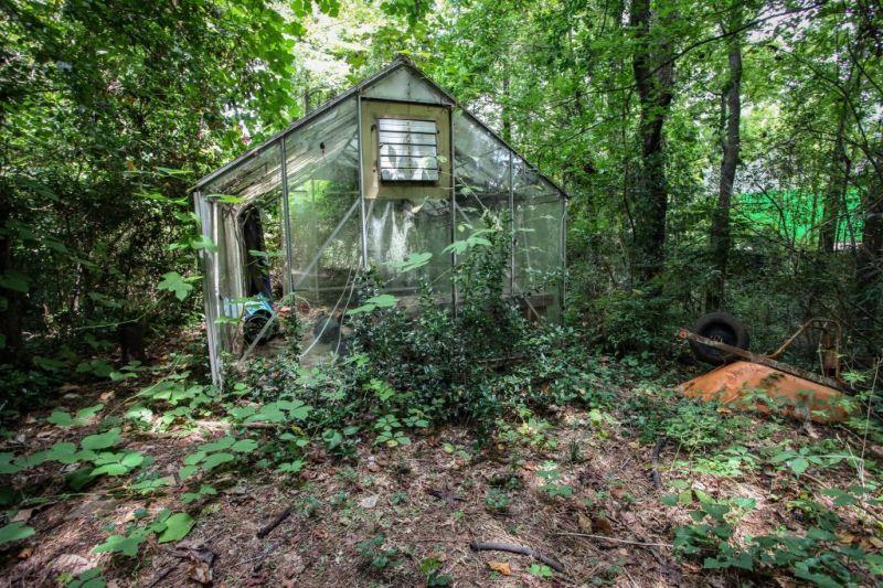 Заброшенный особняк, выглядящий как тропический рай