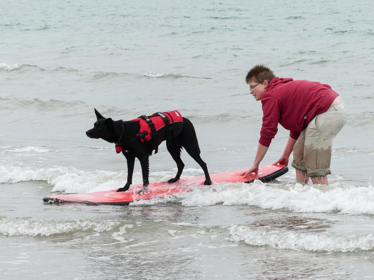 Первая в Великобритании школа серфинга для собак