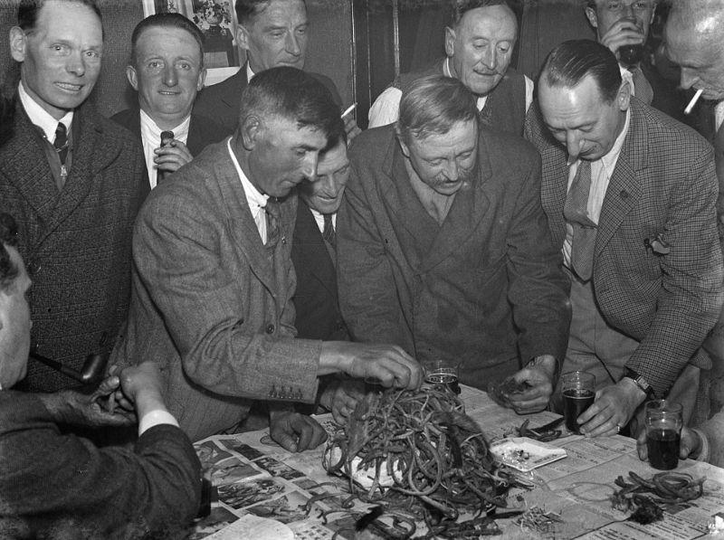Члены мужского клуба Крыса и воробей подсчитывают убитых вредителей