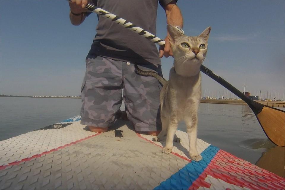 Кошка обожает водные прогулки со своим владельцем