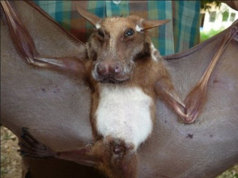 Главный деликатес Микронезии — зрелище не для слабонервных (ФОТО)