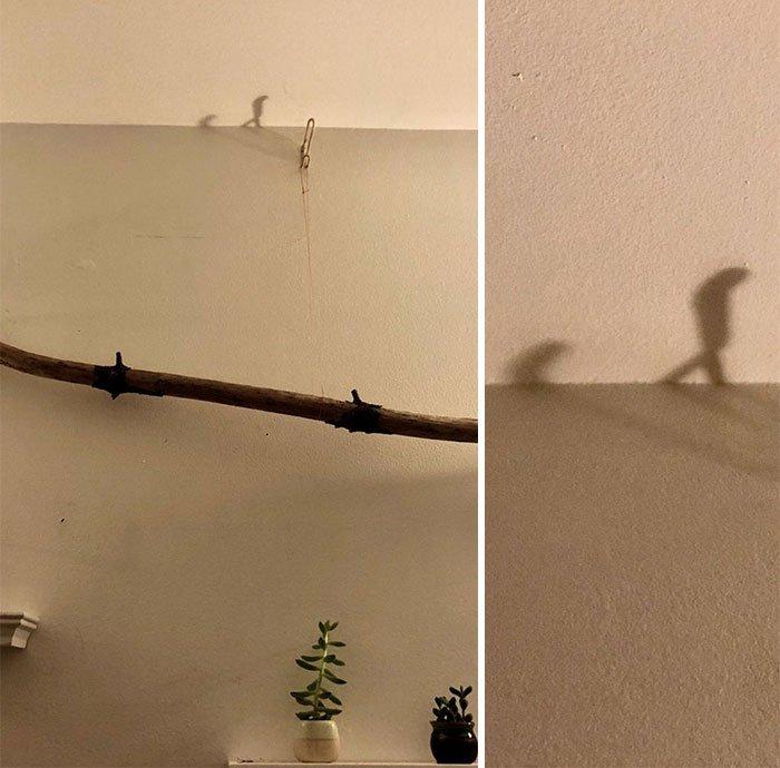 Забавные иллюзии из теней