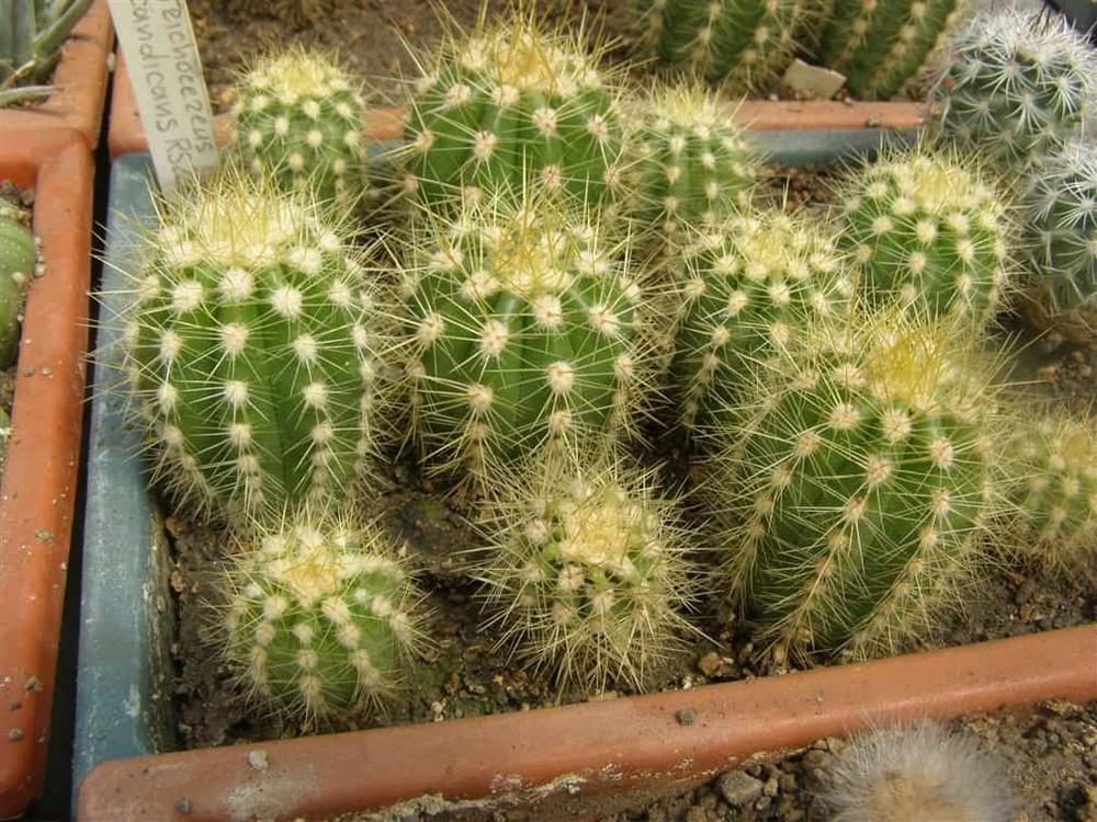 Ядовитые растения, от которых лучше отказаться