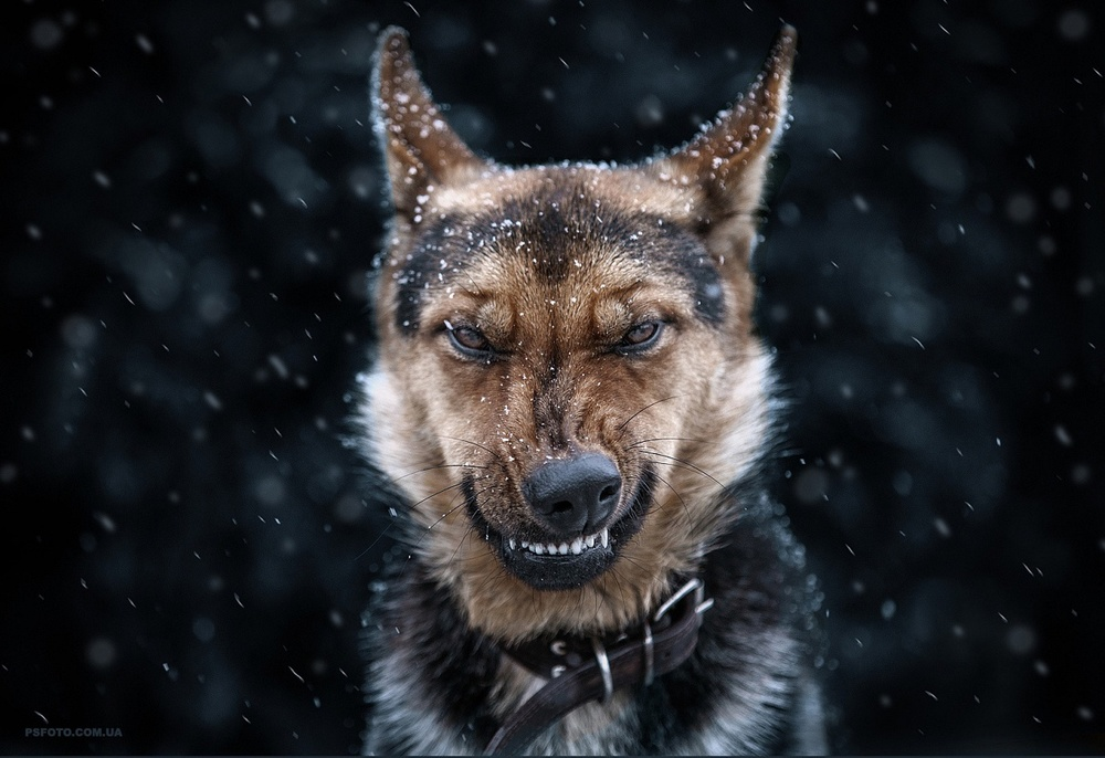 Когда животные не в настроении