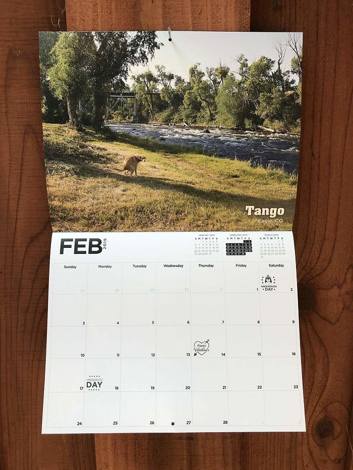 Календарь с гадящими собаками на 2019 год
