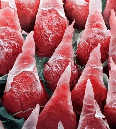 Части нашего организма под микроскопом