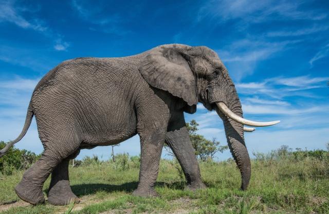 Как устроена слоновья стопа внутри