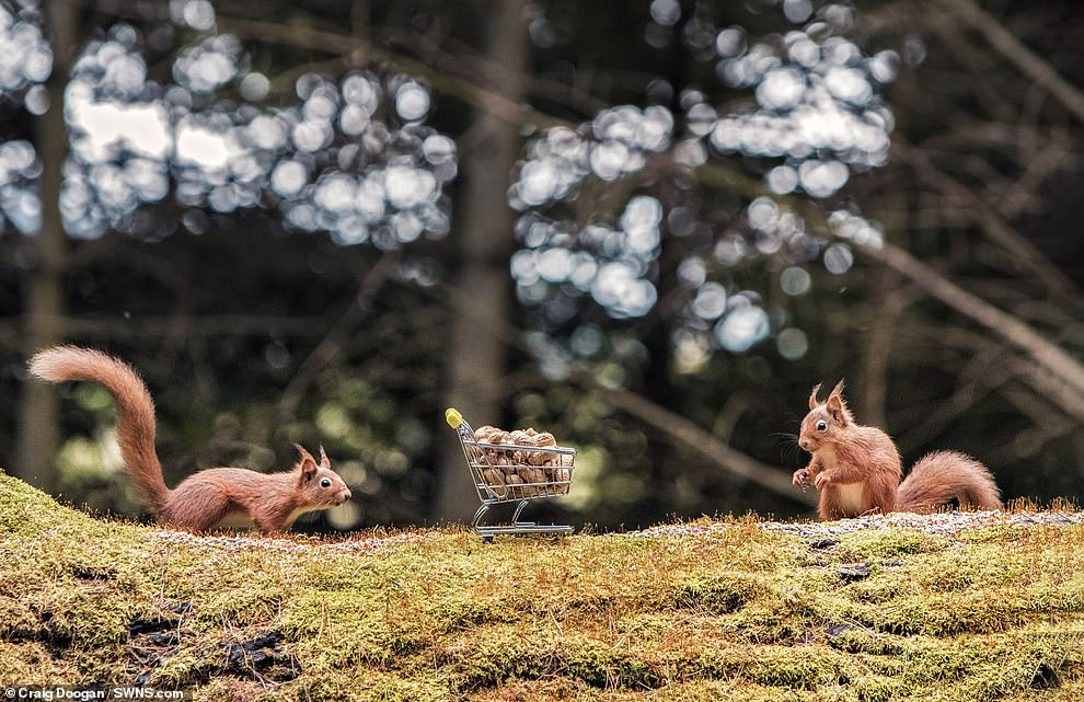 Белки с орехами от шотландского фотографа