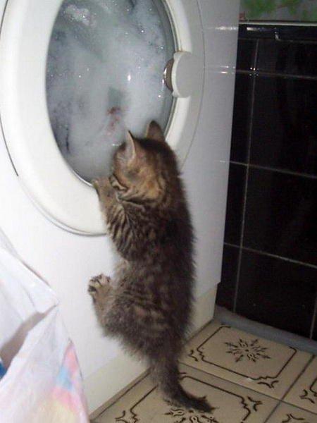 Кошачье любопытство